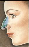 Intérieur du nez